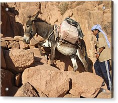 Donkey Of Mt. Sinai Acrylic Print