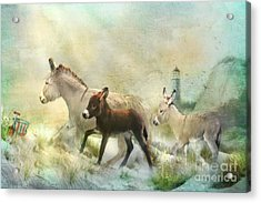 Donkey's Day Off Acrylic Print