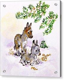 Donkeys Acrylic Print by Diane Matthes