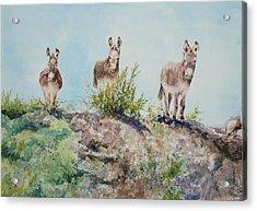 Donkeys Acrylic Print