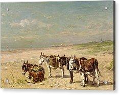 Donkeys On The Beach Acrylic Print by Johannes Hubertus Leonardus de Haas