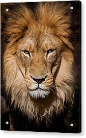 Don't Ask Acrylic Print by Steven Reed