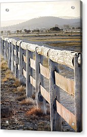 Don't Fence Me In Acrylic Print by Holly Kempe