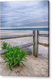 Don't Fence Me In Acrylic Print by Mark Miller