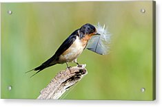 Acrylic Print featuring the photograph Birds Of A Feather... by Stephen Flint