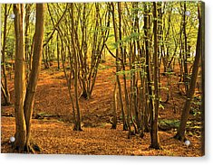 Acrylic Print featuring the photograph Donyland Woods by David Davies