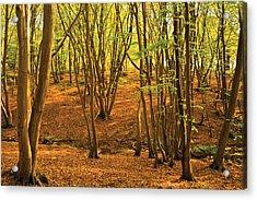 Donyland Woods Acrylic Print by David Davies