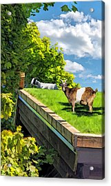 Door County Al Johnsons Swedish Restaurant Goats Acrylic Print