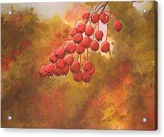 Door County Cherries Acrylic Print by Rick Huotari