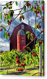 Door County Cherry Harvest Red Barn Acrylic Print