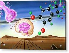 Dopamine Brain Chemistry Acrylic Print