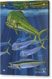 Dorado Rip Off0057 Acrylic Print by Carey Chen