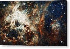Doradus Nebula Acrylic Print by Celestial Images