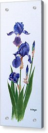 Dot's Iris Acrylic Print
