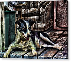 Acrylic Print featuring the digital art 'dottie' by Robert Rhoads