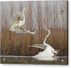 Double Dance - 2 Acrylic Print by Cheng Chang