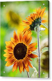 Double Dose Of Sunshine Acrylic Print by Jordan Blackstone