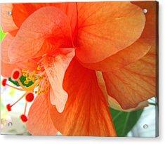 Double Peach Acrylic Print