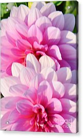 Double Pink Acrylic Print by Kathleen Struckle
