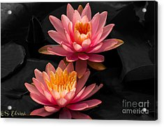Double Pink Acrylic Print by Sabine Edrissi
