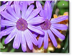 Double Purple Acrylic Print