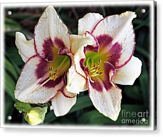 Double The Bloom Acrylic Print by Elizabeth Winter