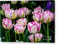 Double Touch - By Sabine Edrissi Acrylic Print by Sabine Edrissi