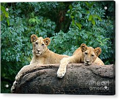 Double Trouble Acrylic Print by Lisa L Silva