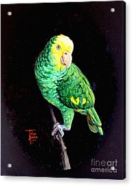 Double Yellow Headed Amazon Paco Acrylic Print