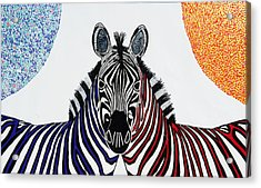 Double Zebra Acrylic Print by Patrick OLeary