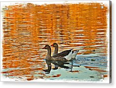 Acrylic Print featuring the photograph Doubles by Lynn Hopwood