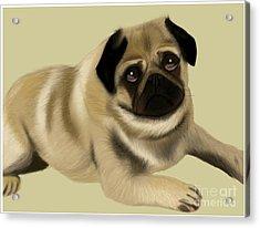 Doug The Pug Acrylic Print