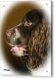 Dougie The Cocker Spaniel 2 Acrylic Print