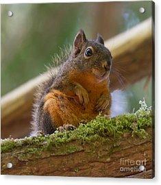 Douglas Squirrel Acrylic Print