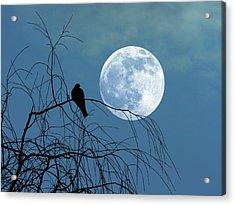 Dove Against A Full Moon Acrylic Print by Detlev Van Ravenswaay