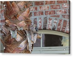 Acrylic Print featuring the photograph Dove Nest 2 by Gregory Daley  PPSA