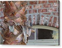 Dove Nest 2 Acrylic Print by Gregory Daley  PPSA