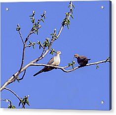 Acrylic Print featuring the photograph Doves by David Lester