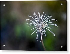 Down At The Pond 2 Acrylic Print by Courtney Wilson