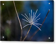Down At The Pond 3 Acrylic Print by Courtney Wilson