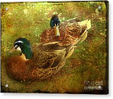 Acrylic Print featuring the photograph Down By The Lake by Chris Armytage
