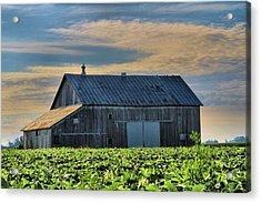 Down On The Farm Acrylic Print by Dan Sproul