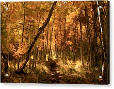 Down The Golden Path Acrylic Print by Donna Kennedy
