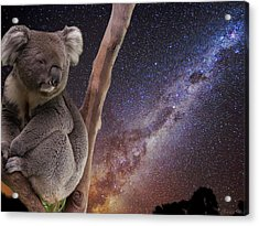 Down Under Acrylic Print by Charles Warren