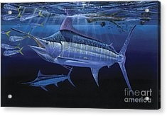 Down Under Off0055 Acrylic Print by Carey Chen