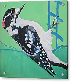 Downey Woodpecker Acrylic Print