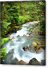Downstram In The Olympics Acrylic Print by Marty Koch
