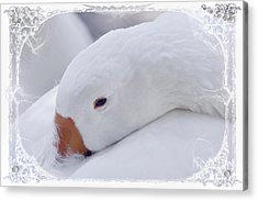Downy Soft Mother Goose Acrylic Print