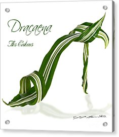 Dracaena Flos Calceus Acrylic Print by Blanchette Photography