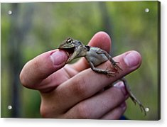 Acrylic Print featuring the photograph Dragon Biting Back by Debbie Cundy